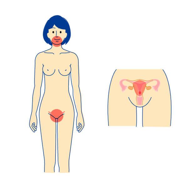 性器ヘルペス 女性